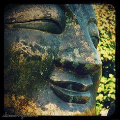 buddha leaves