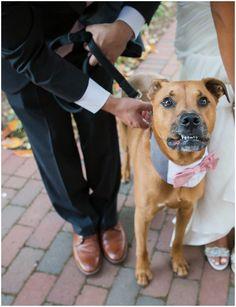Weddings + Puppies – Real Weddings Featuring Man's Best Friend Nc Wedding Venue, Wedding Bride, Wedding Blog, Wedding Day, Mans Best Friend, Best Friends, National Puppy Day, Celebrity Weddings, Lifestyle Blog