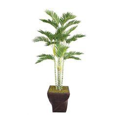 "Laura Ashley 78"" Tall Palm Tree in 17"" Fiberstone Planter, Green"