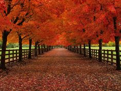 Fall is my favorite time of year. Just look at this picture. Wouldn't you love to be crunching down that road in a pair of boots with a cozy jacket and thick wool scarf?
