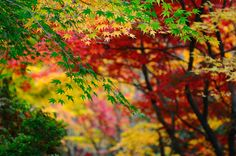 autumn @  Forest Glade Garden by grac13, via Flickr