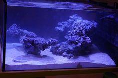 Aquascaping Inspiration