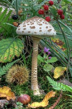 , flowersgardenlove: Amazing Mushroom Beautiful