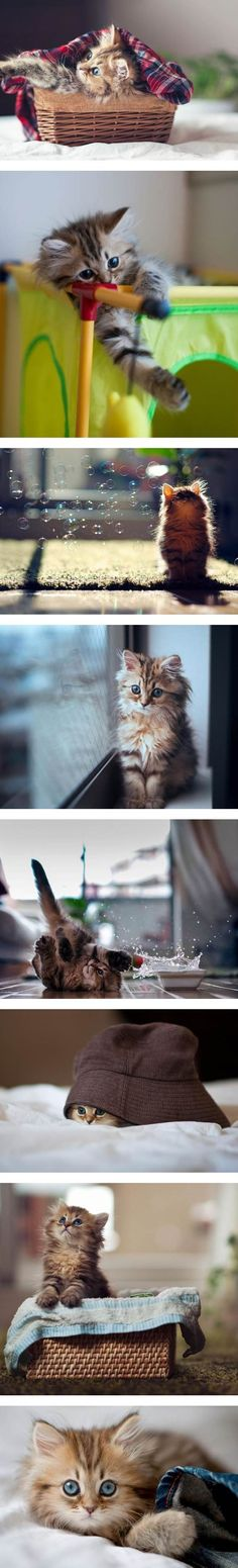 The Most Photogenic Cat :D