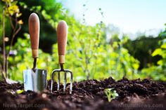 A beginner's guide to gardening: 10 Expert tips everyone must consider – NaturalNews.com