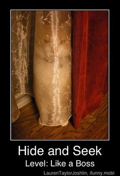 Kitty Cat Hide and Seek Level Creepy ---- hilarious jokes funny pictures fails meme humor - kitty cat humor funny joke gato chat captions feline laugh Funny Animal Pictures, Funny Animals, Cute Animals, Angry Animals, Funniest Pictures, Creepy Pictures, Pictures Images, Crazy Cat Lady, Crazy Cats