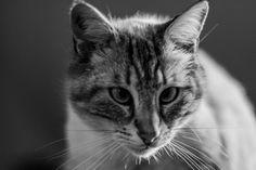Fripon le Chat au réveil