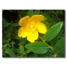 Beautiful Flower Postcard :) #postcard #flower #flowers #yellow #nature