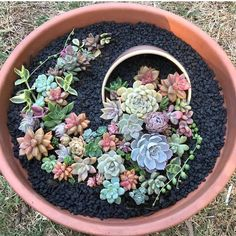 Deco trend: Small colorful DIY succulent flower garden pot in a pot Deco trend: . - Deco trend: Small colorful DIY succulent flower garden pot in a pot Deco trend: Small colorful DIY - Succulent Gardening, Succulent Pots, Planting Succulents, Planting Flowers, Propagate Succulents, Succulent Ideas, Container Gardening, Succulent Landscaping, Flower Gardening
