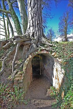 This tree/brick tunnel is by the side of the Trent & Mersey canal near to Wolseley Bridge Rugeley. If you walk along the canal until virtually opposite Bishton Hall School and drop down the bank towards the river then you can see it. Cool Tree Houses, Fairy Houses, Weird Trees, Nature Landscape, Tree House Designs, Underground Homes, Unique Trees, Nature Tree, Abandoned Places