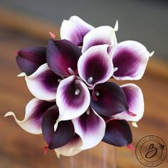 plum and white calla lily wedding bouquet real natural touch Small Wedding Bouquets, Lily Bouquet Wedding, Purple Wedding Flowers, Pearl Bouquet, Black Flowers, Calla Lily Tattoos, Calla Lillies Bouquet, Purple Calla Lilies, Flower Bouquets