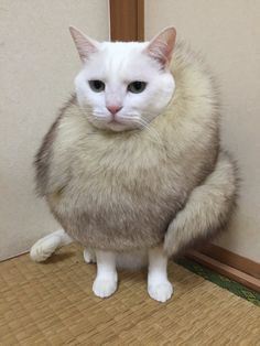 What a gorgeous cat - VERY UNUSUAL fur! LOL