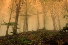 fog in June