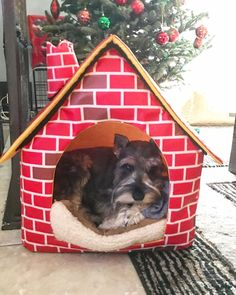 Stefan in his new dog house which he loves!