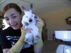 Rabbit Showmanship Step by Step 2 - YouTube