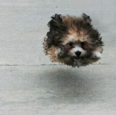 hover dog flying dog (1)
