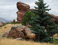 Majestic Fall Elk