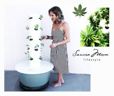 Sanura Moon Lifestyle ~ Whole Body Holistic Wellness Natural Wellpreneur Eco Beauty, Pure Beauty, Organic Beauty, Healing Oils, Natural Healing, Grow Your Own Food, Grow Food, Plant Diet, Organic Market