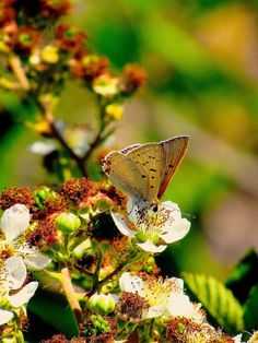 Butterfly on Flowers Photo by robin Wechsler — National Geographic Your Shot