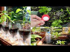 7 sorprendentes TRUCOS para el jardín y la huerta que DESCONOCIAS - YouTube