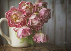 Fancy Tulips - null