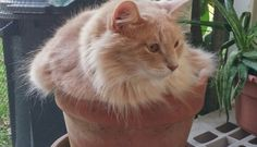 21 Very Important Cat Plants  Whatever you do, don't water them!!