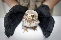 owl 5046