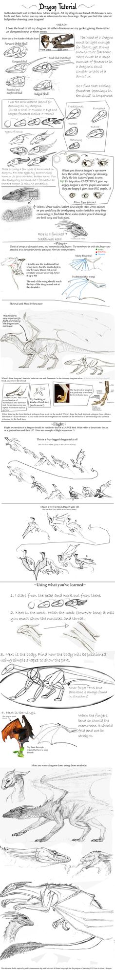 Dragon Tutorial by ~Giddygecko on deviantART | Using for future ref. This mirrors the style I was looking for. Very helpful!