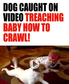 GONE VIRAL: Have you seen this adorable video yet? Dog caught on camera teaching baby how to crawl!: