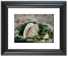 """11"""" x 14"""" Traditional Photography Prints / Wall Décor Nature Photograph: Seaweed and Shells on the Beach. View all of the stunning Nature Photos by Landscape and Nature Photographer Melissa Fague at:  https://www.etsy.com/shop/PIPAFineart Limited edition fine art nature photography prints and canvas wraps are also available in a variety of sizes."""