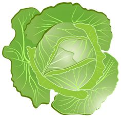 This high quality free PNG image without any background is about cabbage, plant, vegetables and green. Cabbage Vegetable, Cooking In The Classroom, Vegetable Illustration, Scrapbook Images, Farm Party, Farm Theme, Adult Crafts, Food Illustrations, Colouring Pages