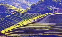 Autumn travel booms in Viet Nam           Mu Cang Chai terraced fields in the northern Yen Bai Province. Autumn tours offered by local travel firms are becoming increasingly popular, with companies announcing a rise in the number of bookings. — VNA/VNS Photo    HA NOI (VNS) — Autumn tours offered by local travel firms are bec...  Vietnam Tour Expert Help: www.24htour.com Halong Bay Cruises Tour  Expert Help: www.halongcruises.com.au  #vietnamtravelnews #vntravelnews
