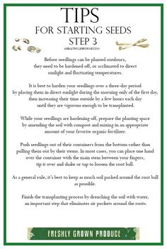 Tips for Starting Seeds Step 3 {Transplanting} - A Healthy Life For Me