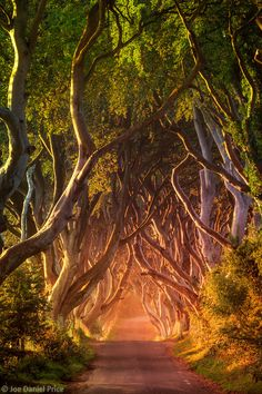 Sunrise at The Dark Hedges, Ballymoney, County Antrim, Northern by Joe Daniel Price.What is on the other side of The Dark Hedges? Places Around The World, Around The Worlds, Beautiful World, Beautiful Places, Monuments, Wild Eyes, Fantasy Places, Hedges, Nature Pictures