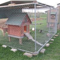 Temp doghouse coop inside dog run covered w/2x4 wire... Chicken wire apron at bottom