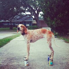 """Photographer Theron Humphrey & his dog/model Maddie """"Maddie On Things"""""""