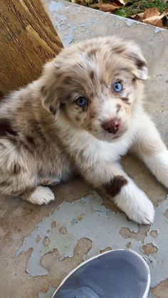 11 small dog breeds that are more than cute - Goodbye kleine Hunderassen, die mehr als süß sind – Goodbye My Best Friend. Super Cute Puppies, Cute Dogs And Puppies, Pet Dogs, Dog Cat, Doggies, Small Puppies, Puppies Puppies, Cute Small Dogs, Adorable Puppies