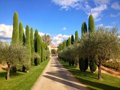 Chateau de Berne is a wonderful hotel and winery close by French Countryside, Provence, Sidewalk, Beautiful, Bag, Viajes, Side Walkway, Walkway, Bags