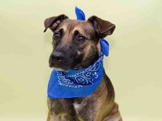 ***SUPER URGENT!!!*** - PLEASE SAVE DAISY!! - EU DATE: 8/29/2014 -- Daisy Breed:German Shepherd (mix breed) Age: Young adult Gender: Female Size: Medium Shelter Information: Miami-Dade Animal Services 7401 NW 74 St  Miami, FL Shelter dog ID: A1555335 Contacts: Phone: 305-884-1101 Name: Adoptions email: Pets@miamidade.gov