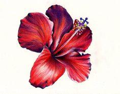 Hibiscus Flower by KatePowellArt.deviantart.com on @deviantART