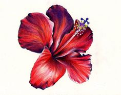 Red Hibiscus Flower Tattoo Design