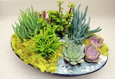 Another World Under the Sea Centerpiece by AnotherWorldPlants, $100.00