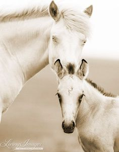 Brothers II  Fine Art Wild Horse Photograph by Carol Walker www.LivingImagesCJW.com