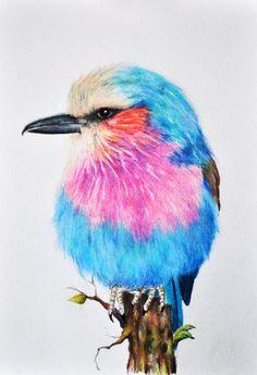 Lilac Roller - Original Colored Pencil drawing 5.5 x 8 Inch Bird painting, Bird art