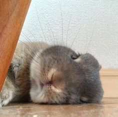 I love Rabbits