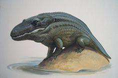 Ilustración de la década de 1980 de un Mastodonsaurus jaegeri, a cargo de William Francis Phillipps. Los mastodonsaurios no eran reptiles, sino anfibios capitosaúridos avanzados del triásico inferior: como ranas enormes (entre tres y cuatro metros de longitud) con cabeza triangular de cocodrilo.