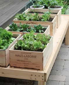 Wine Crate Garden - I may be able to grow something, after all!