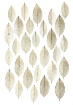 Fancy Fronds Wall Decor Set. Bring the beauty of nature into your space with this foliage-inspired decor set! #gold #modcloth