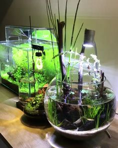 Planted Bowl Aquarium - plants with fish Planted Bowl Aquarium Planted Aquarium, Aquarium Garden, Aquarium Fish Tank, Goldfish Aquarium, Mini Aquarium, Fish Aquariums, Plant Fish Tank, Fish Tank Garden, Turtle Aquarium