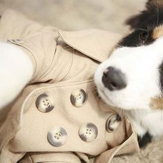Keep your doggy warm even in the coldest months!  Westerly Trench Coat | Felix Chien